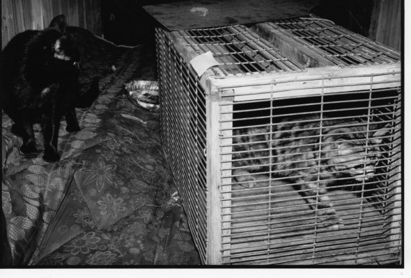 Trapping Tips Which Trap Is Best Cat Action Trust 1977