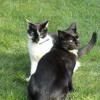 Sidney (left) and Douglas - rehomed by Central London branch