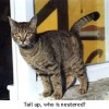Tail up, who is neutered?