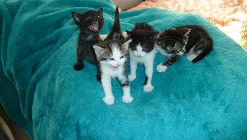 Beautiful kittens Lulu, Eliza, George and Babs are lucky to be alive